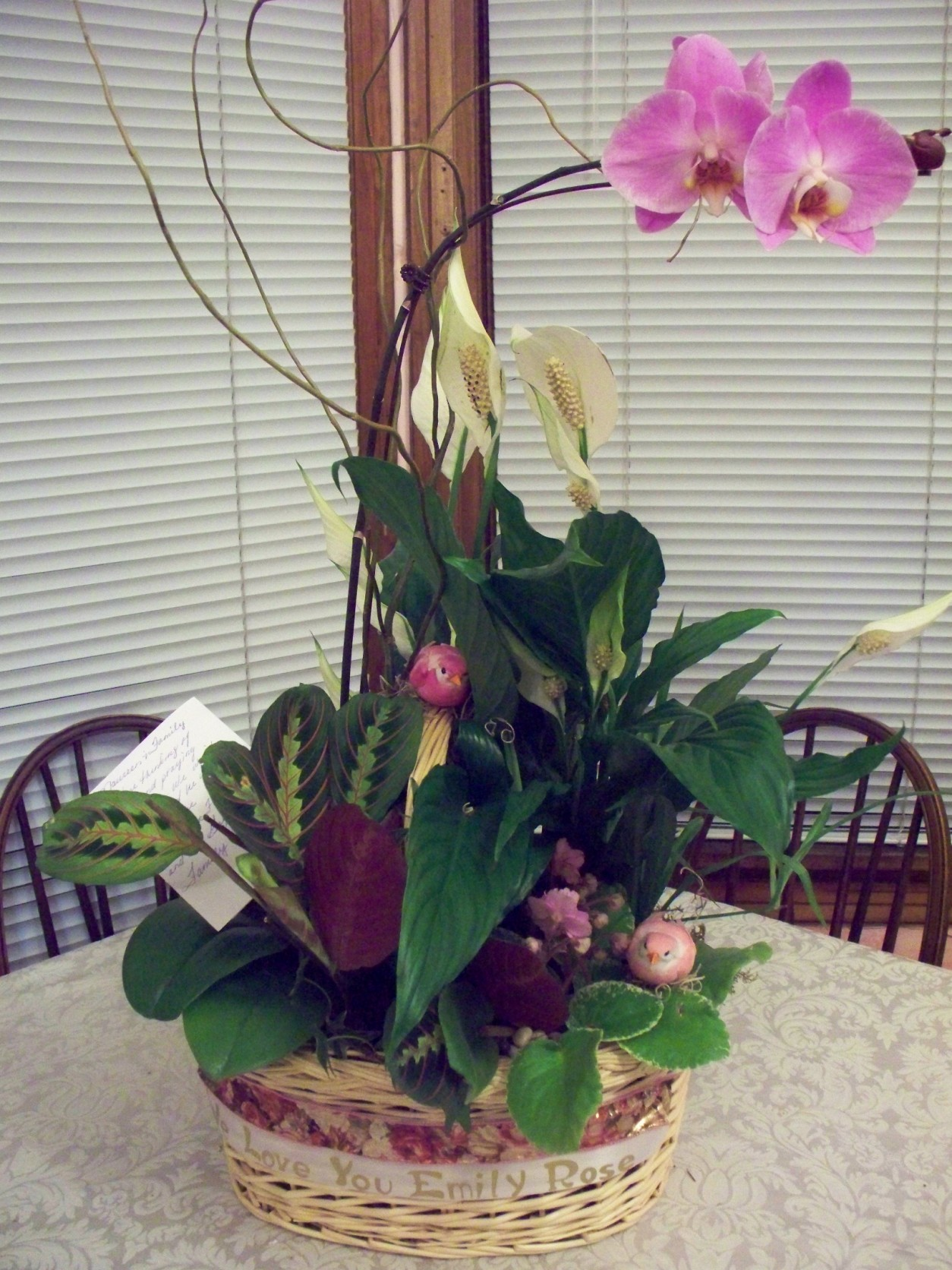 ORCHID BASKET GARDEN