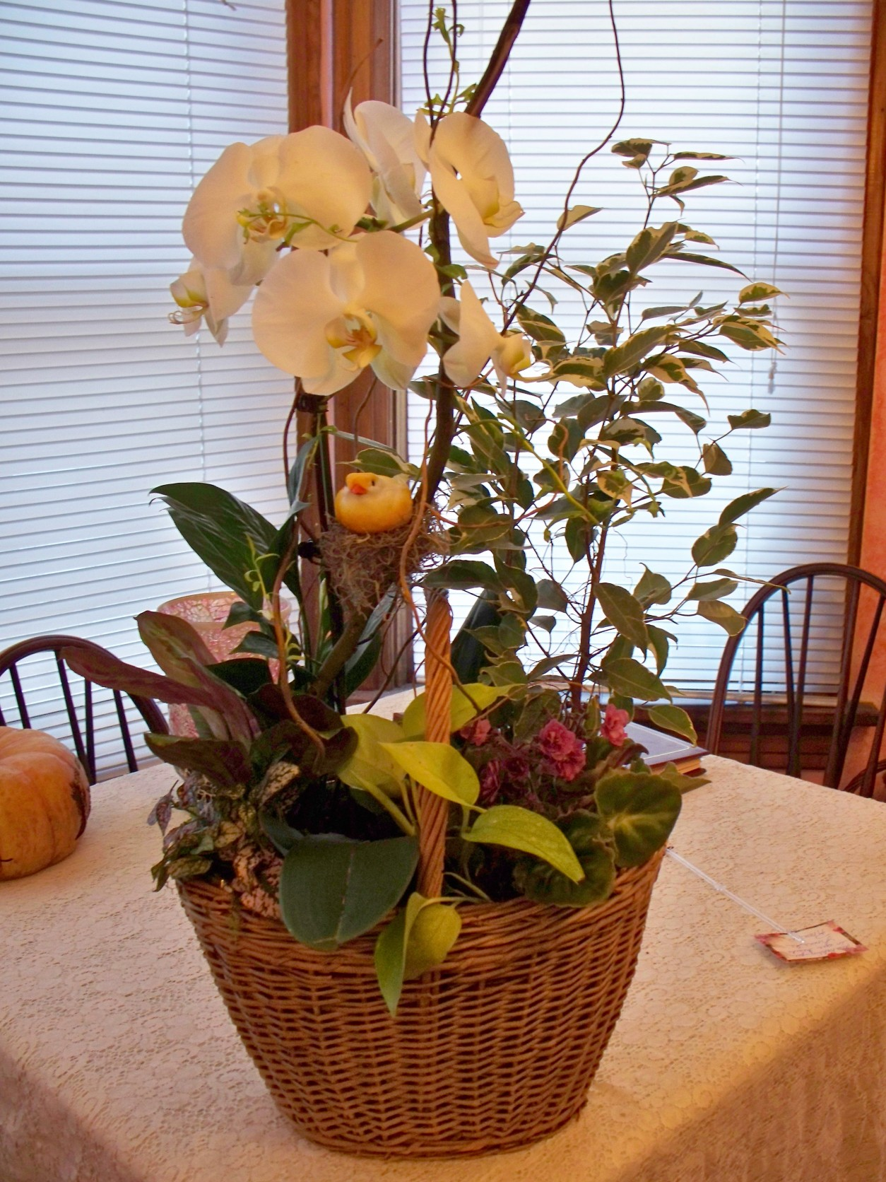 PAHALENOPSIS ORCHID BASKET GARDEN