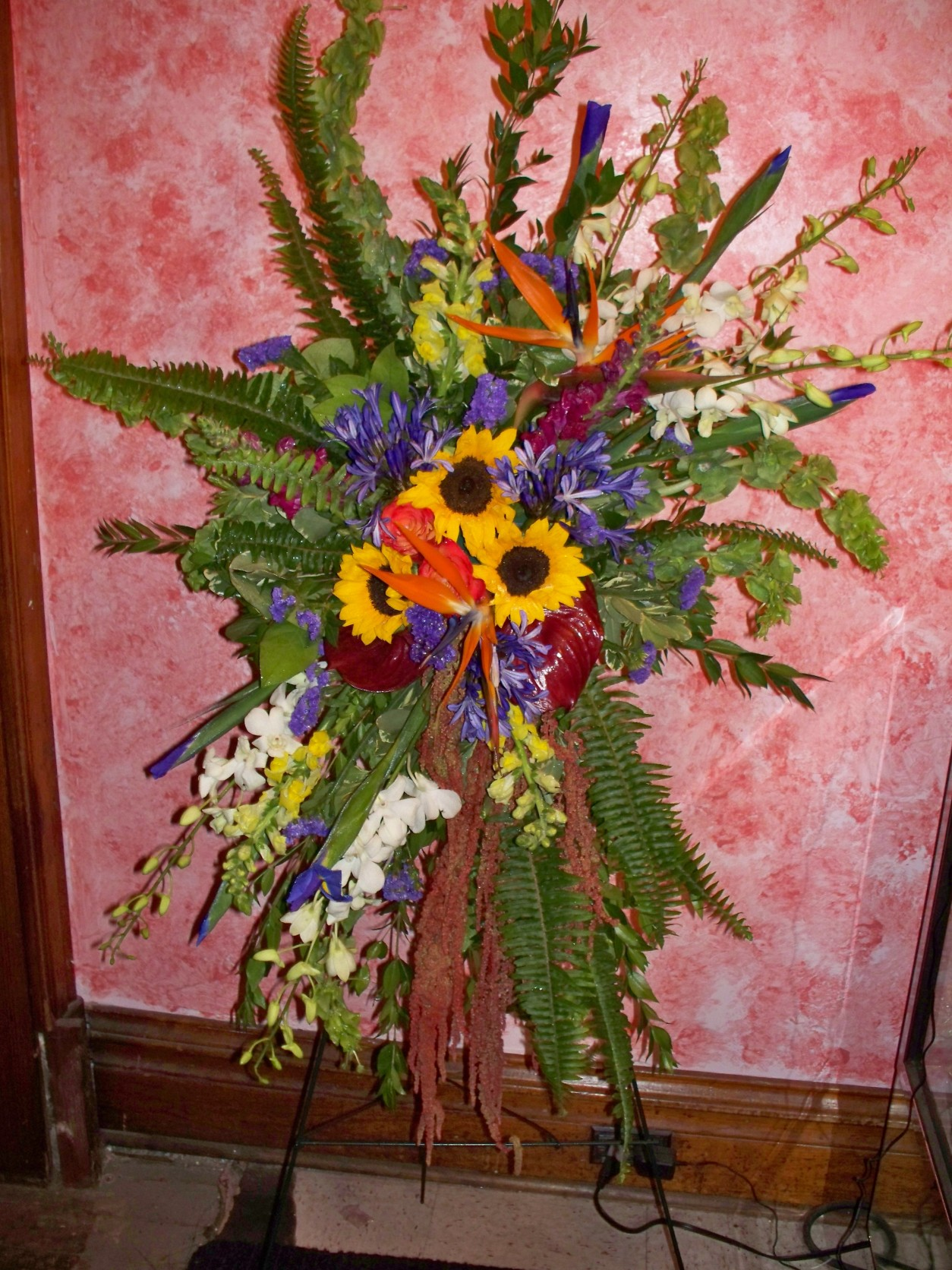 Dawns Creations Exotic Plants Flowers And Gardens On Colorado