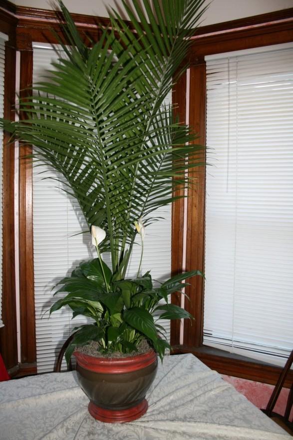 1734 FLOOR PLANT