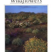 528 Colorado Desert Wildflowers: A Guide to Flowering Plants of the Low Desert, Including the Coachella Valley, Anza-Borrego Desert, and Portions of